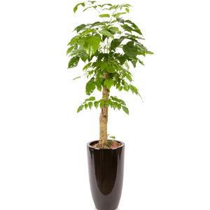해피트리 행복나무