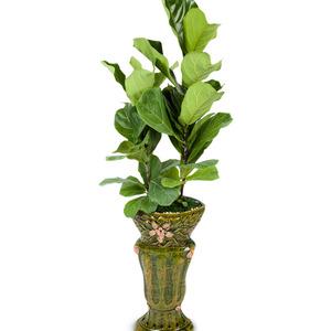 떡갈잎 고무나무 (특1호)