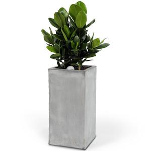 시멘트분 고급 크루시아(약90cm)