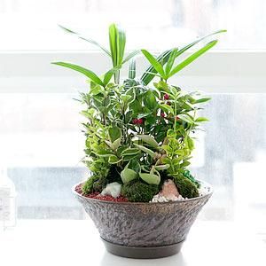 모듬식물(대)